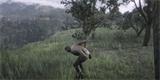 Hráči RDR 2 přišli na to, jak zamezit smrti při pádu z výšky. Stačí zvracet